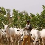 Why would be no peace in any state that bans Open Grazing – Fulani Group